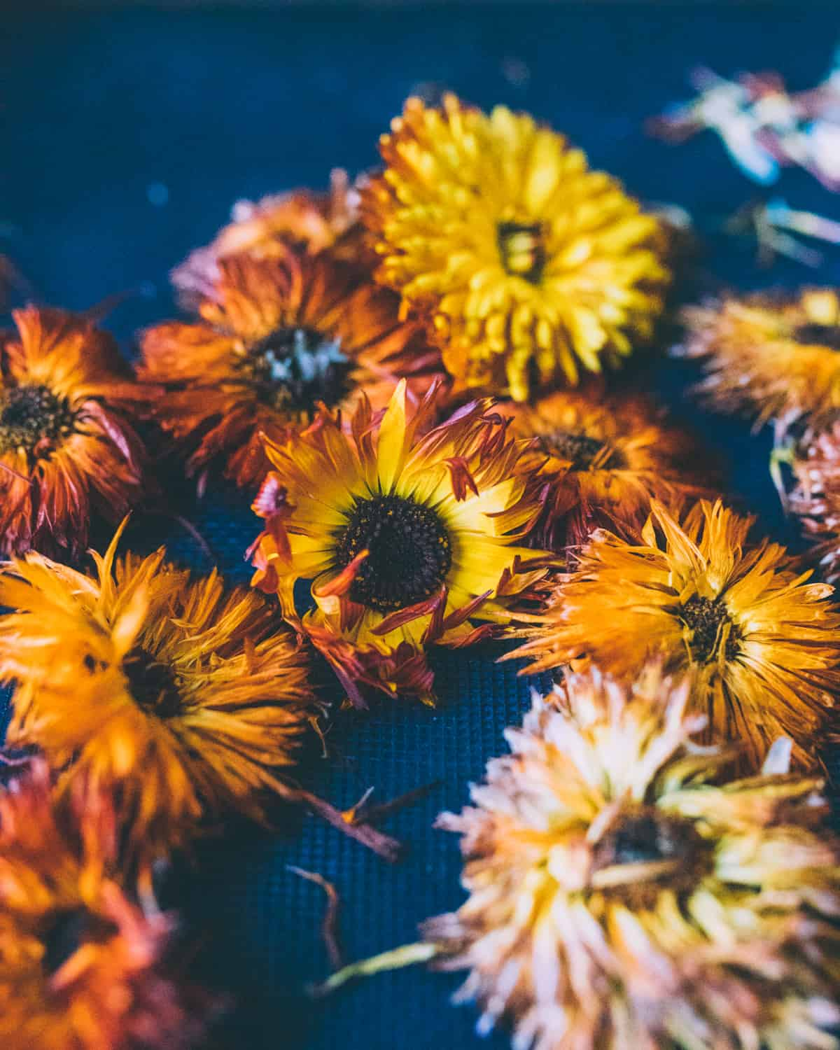 calendula flowers of different shapes and sizes