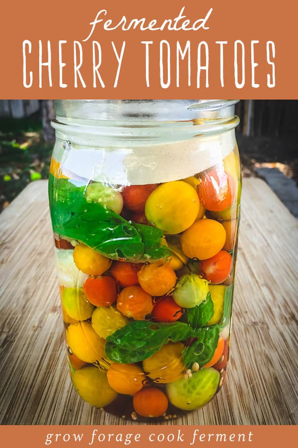 a jar of fermenting cherry tomatoes with basil
