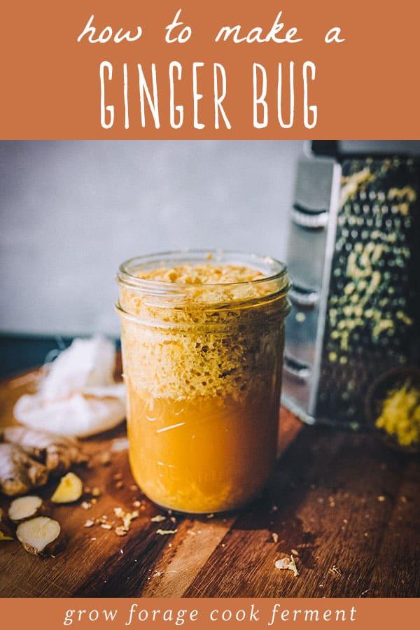 a bubbly jar of homemade ginger bug starter